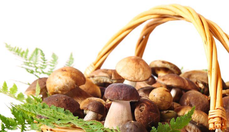 100 Gramm Pilze (Steinpilze, Champignons und Pfifferlinge) enthalten 15 Mikrogramm Biotin