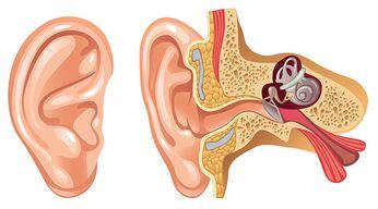 Ohren reinigen – so geht's richtig!