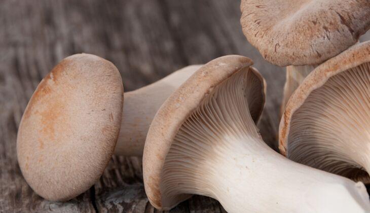 Pilze mit vielen Ballaststoffen