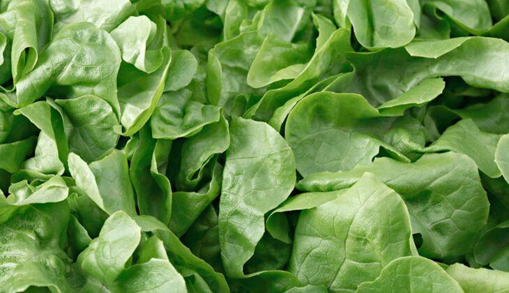 Salatsorten in der Übersicht: Eichblattsalat