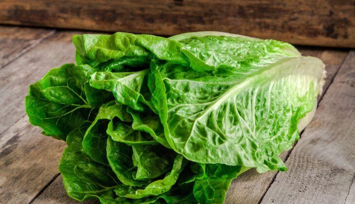 Salatsorten in der Übersicht: Römersalat