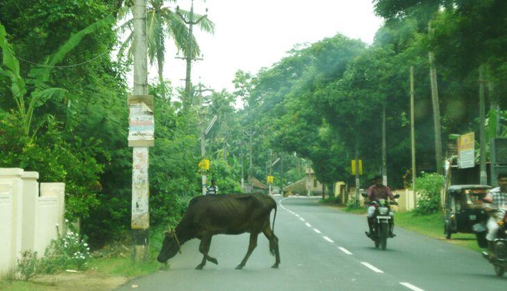 Straßenchaos in Indien