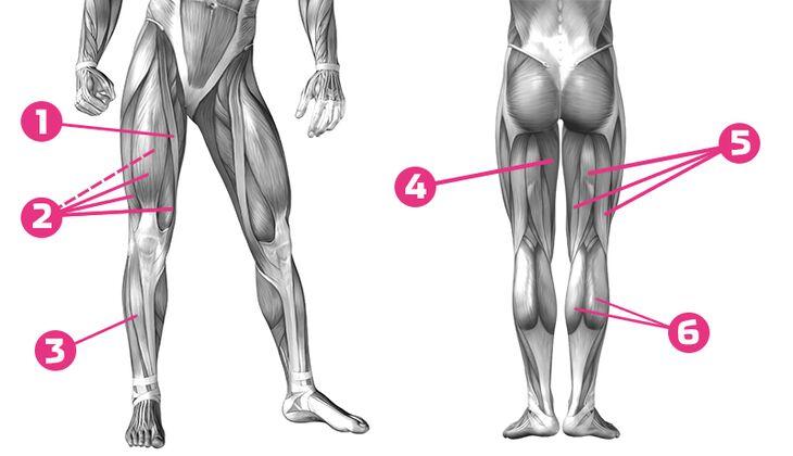 So arbeitet unsere Beinmuskulatur » WomensHealth.de
